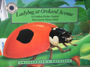 Frogs and Ladybugs – Mrs  Ackley